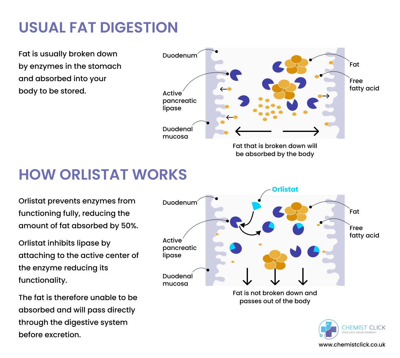 Orlistat mechanism of action